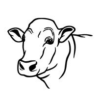 drawing of male bull head