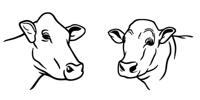 illustration of female cow head and male bull head