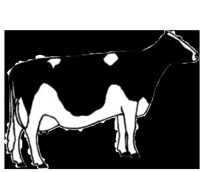 illustration of cow type three