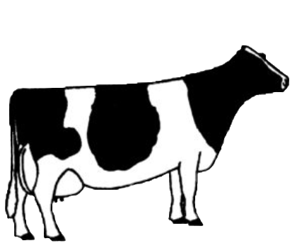 illustration of cow type five