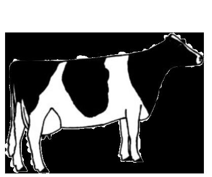 illustration of cow type six